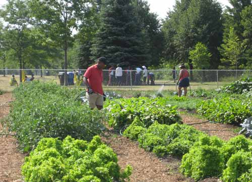 Malvern residents working in their urban garden near Rouge Park. With more space, there could be so much more healing.
